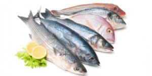 Evdeki Balıklar Sağlıklı Bir Şekilde Nasıl Saklanmalı
